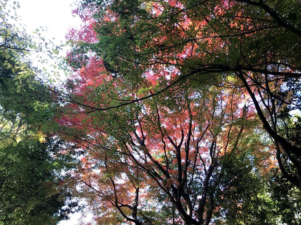 太田の小道の紅葉が美しい