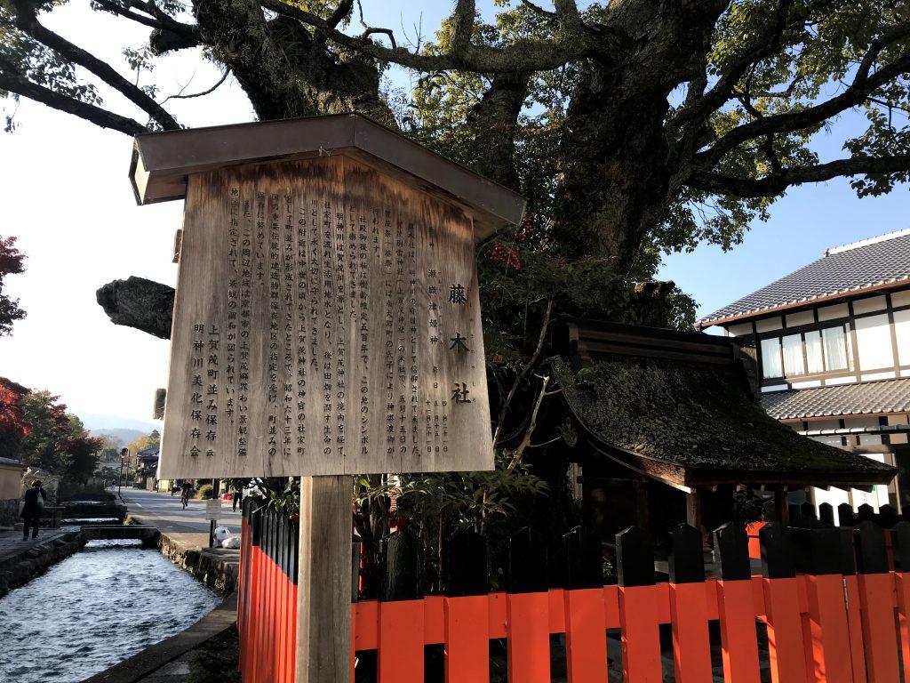 藤木社(ふじのきじんじゃ) 上賀茂の摂社の一つ。隣に鴨川を源流とし、上賀茂神社境内(京都最古の神社の一つ)(みたらし川)から明神川が流れ、農業用水として、鴨川に戻る。 御神木の楠は樹齢500年、葵祭では神輿渡御が行われる。 この界隈が社家の街並みです。