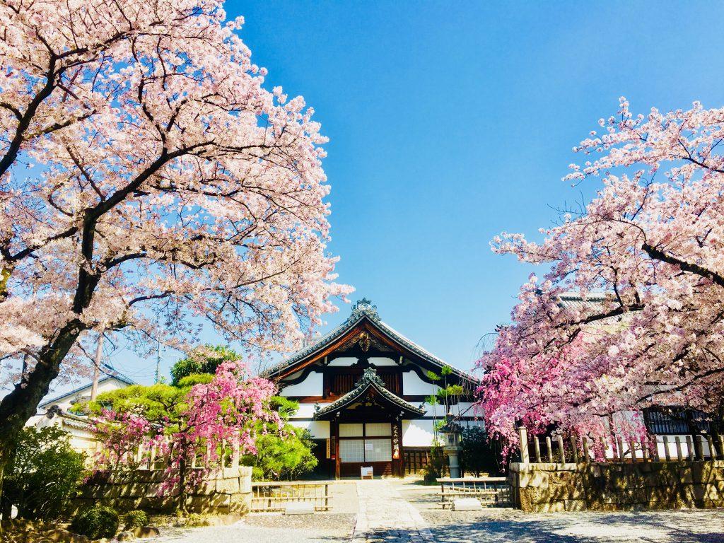 極楽のような春の妙顕寺